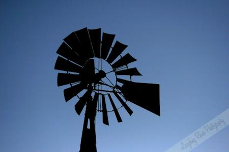 Windmill bold