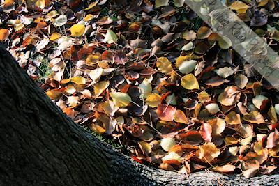 Leafy Base