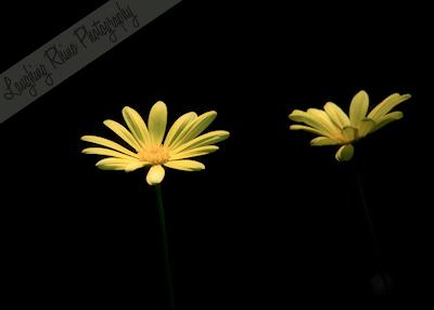 Moody Flowers