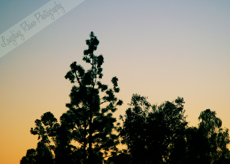 A pretty little sunset