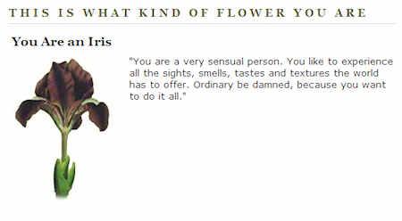 I'm an Iris