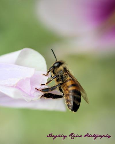 Same Bee, Same Photo, Different Crop