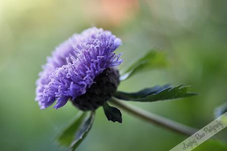 Pam's Flower