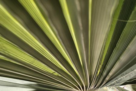 Furnace Creek plant Fanned
