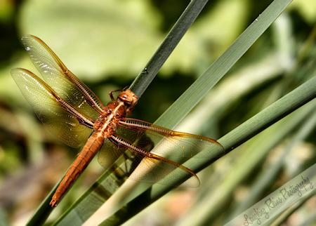 My Dragonfly Friend