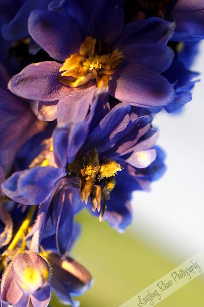 La Jolla Flowers