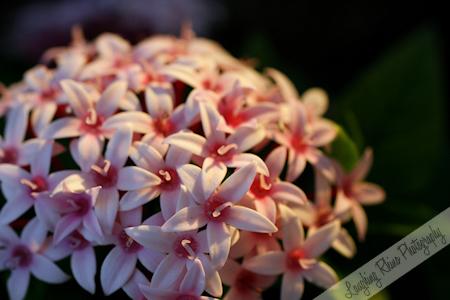 Flowers in La Jolla