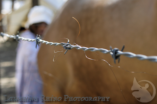 Horse hair and barbed wire