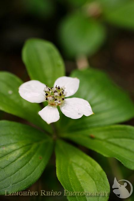 Chena Flower