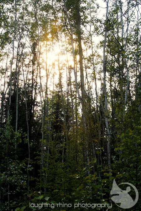Chena woods