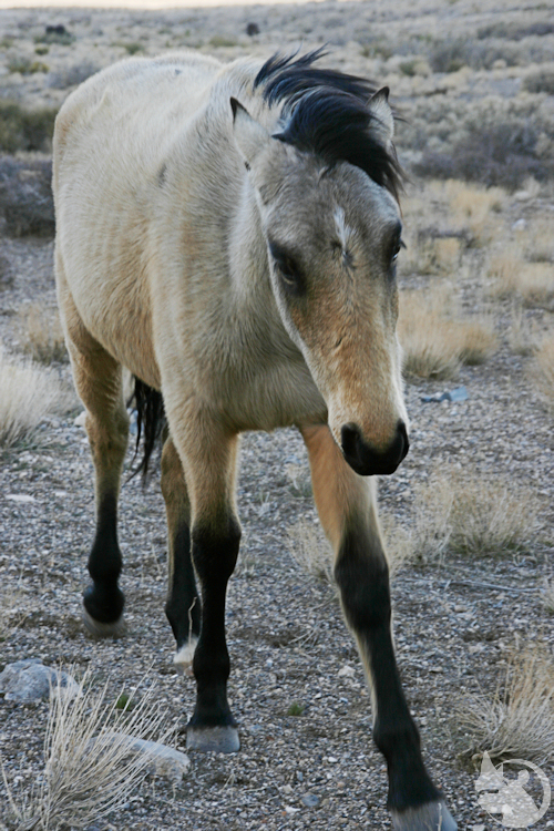 One of the twins - Wild Horses