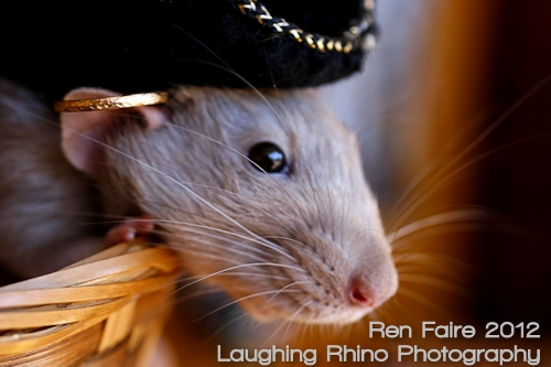 Pie-Rat Long John Silver