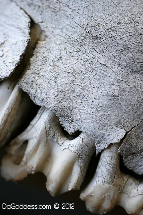 Backyard skull