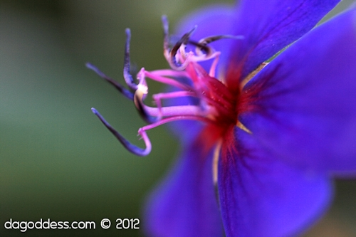 purply blue flower