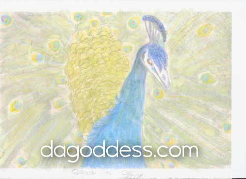 Mom's peacock