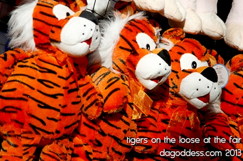 Tigers on display