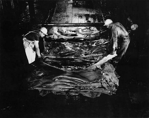 Salz Tannery pit