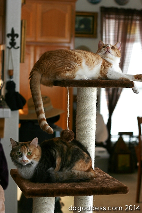 more stacked cats